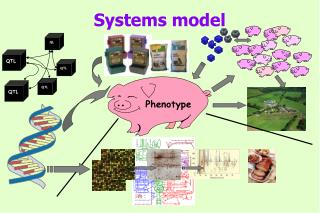 Systems model