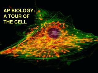AP BIOLOGY:  A TOUR OF  THE CELL