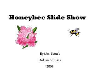 Honeybee Slide Show