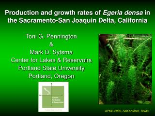 Production and growth rates of Egeria densa in the Sacramento-San Joaquin Delta, California