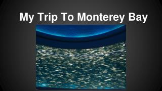 My Trip To Monterey Bay
