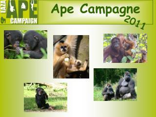 Ape Campagne