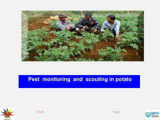Pest  monitoring  and  scouting in potato