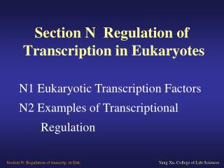 Section N  Regulation of   Transcription in Eukaryotes