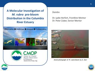 A Molecular Investigation of  M. rubra   pre-bloom Distribution in the Columbia River Estuary
