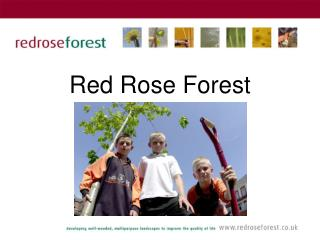 Red Rose Forest