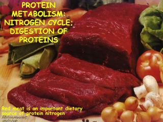 PROTEIN METABOLISM: NITROGEN CYCLE; DIGESTION OF PROTEINS