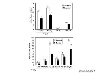 nmoles Fe/mg protein