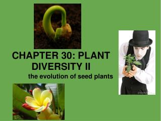 CHAPTER 30: PLANT DIVERSITY II