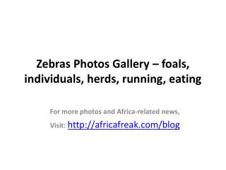 Photos of zebra to download for free