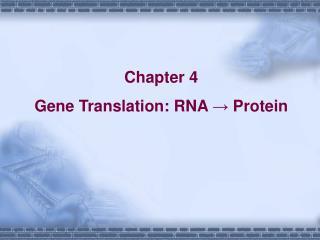Chapter 4 Gene Translation: RNA → Protein