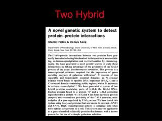Two Hybrid