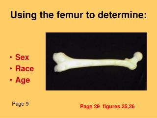 Using the femur to determine: