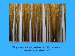 Why are you trying so hard to fit in, when you were born to stand out?