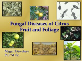 Fungal Diseases of Citrus Fruit and Foliage