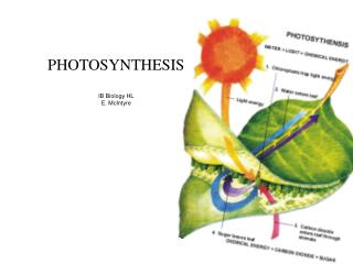 PHOTOSYNTHESIS IB Biology HL E. McIntyre