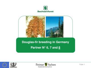 Introduction history of Douglas-fir to Germany