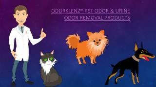 The Best Way to Remove Pet and Urine Odors