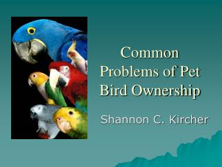Common Problems of Pet Bird Ownership