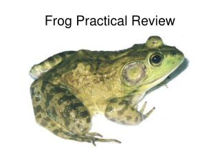 Frog Practical Review