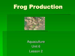 Frog Production