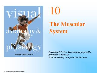 10 The Muscular System