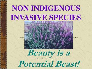 NON INDIGENOUS INVASIVE SPECIES