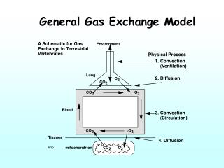 General Gas Exchange Model