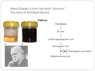 "Read Chapter 3 from the book ""Genome"" The story of Archibald  Garrod"