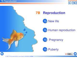 7B Reproduction