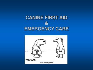 CANINE FIRST AID  &  EMERGENCY CARE
