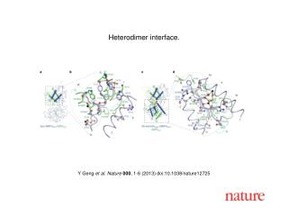 Y Geng  et al. Nature  000 , 1-6 (2013) doi:10.1038/nature12725