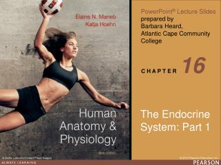 The Endocrine  System: Part 1