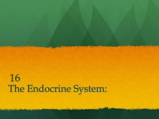 The Endocrine System: