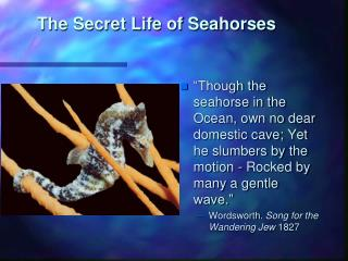 The Secret Life of Seahorses