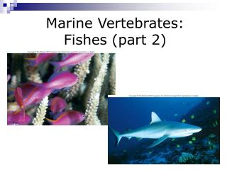Marine Vertebrates: Fishes (part 2)