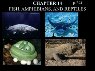 CHAPTER 14 FISH, AMPHIBIANS, AND REPTILES