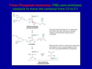 Triose Phosphate Isomerase  (TIM) uses acid/base catalysis to move the carbonyl from C2 to C1