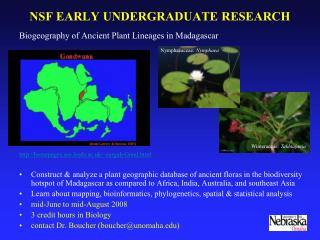 NSF EARLY UNDERGRADUATE RESEARCH