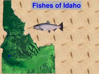 Fishes of Idaho