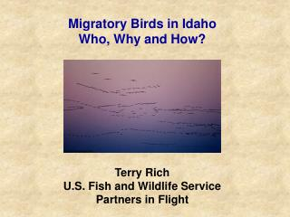 Migratory Birds in Idaho Who, Why and How?