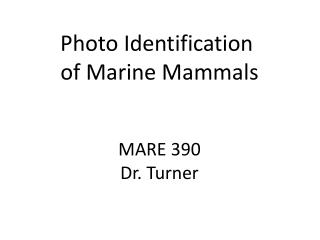 Photo Identification  of Marine Mammals MARE 390 Dr. Turner