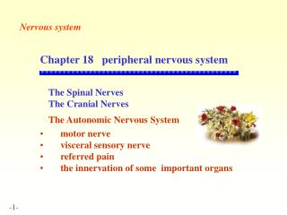 Chapter 18    peripheral nervous system