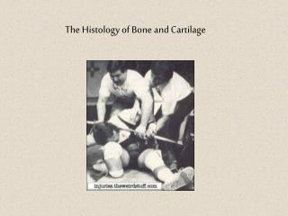 The Histology of Bone and Cartilage