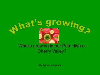What's growing in our Petri dish at Cherry Valley?