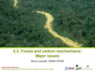 5.3. Forest and carbon mechanisms: Major issues