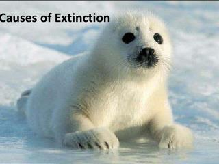 Causes of Extinction