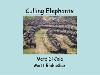Culling Elephants