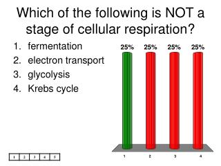 Which of the following is NOT a stage of cellular respiration?