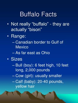 Buffalo Facts